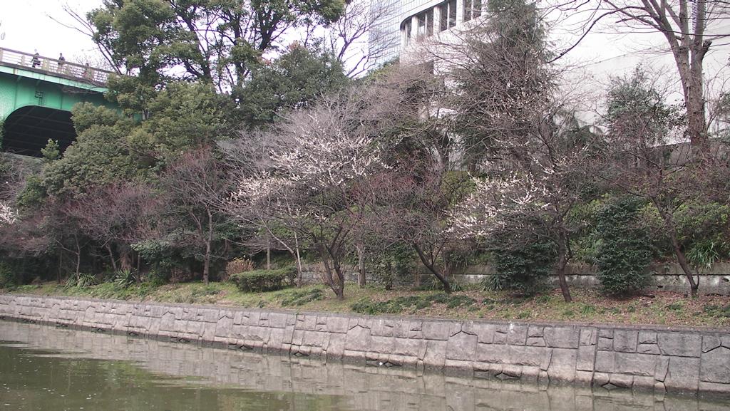 http://www.dgcr.com/kiji/20090305/09